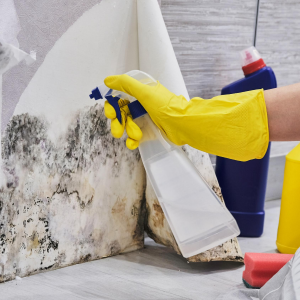 Mold removal from a wall